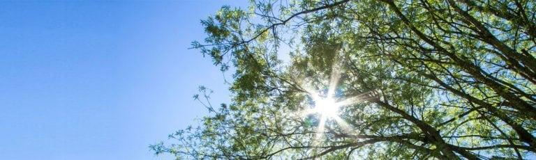 branches soleil