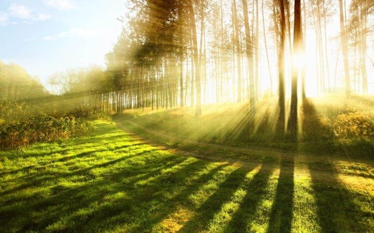 chemin dans la lumière