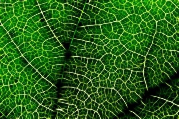 feuille-nature-reseau-connexions-vie