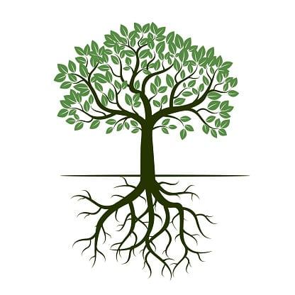 arbre-sophrologie-phylosophie-vie