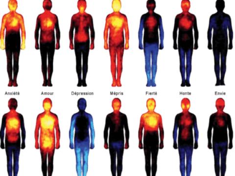 Image réactions corporelles émotions