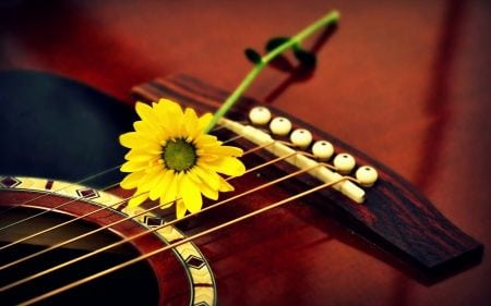 guitare sophrologie cours de musique et ateliers