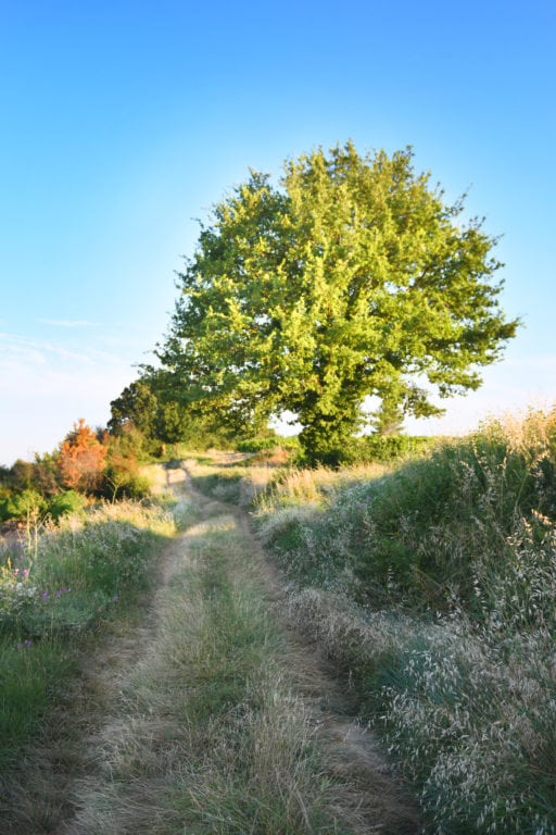 chene chemin nature arbre Cabinet sophrologie thérapie Alexandre Jacquelin Annecy Doussard